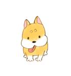 ころころころころ柴犬(個別スタンプ:01)