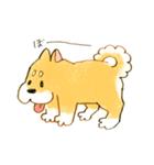 ころころころころ柴犬(個別スタンプ:02)