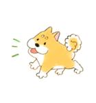 ころころころころ柴犬(個別スタンプ:12)