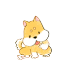 ころころころころ柴犬(個別スタンプ:13)