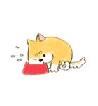 ころころころころ柴犬(個別スタンプ:16)