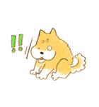 ころころころころ柴犬(個別スタンプ:21)
