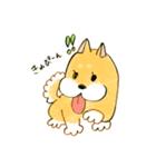 ころころころころ柴犬(個別スタンプ:24)