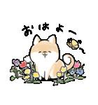 ほんわかしばいぬ<春>(個別スタンプ:1)