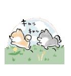 ほんわかしばいぬ<春>(個別スタンプ:28)