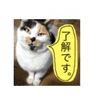 ご注意猫舎(個別スタンプ:01)