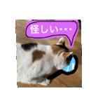 ご注意猫舎(個別スタンプ:02)