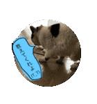 ご注意猫舎(個別スタンプ:05)