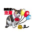 ご注意猫舎(個別スタンプ:09)