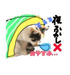 ご注意猫舎(個別スタンプ:10)