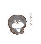 動く!もふ柴-黒-(個別スタンプ:05)