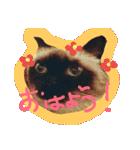 楽しい猫のスタンプ!(個別スタンプ:02)