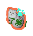 楽しい猫のスタンプ!(個別スタンプ:04)
