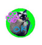 楽しい猫のスタンプ!(個別スタンプ:05)
