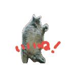 楽しい猫のスタンプ!(個別スタンプ:09)