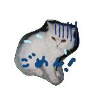 楽しい猫のスタンプ!(個別スタンプ:10)