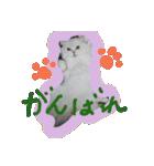 楽しい猫のスタンプ!(個別スタンプ:11)