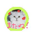 楽しい猫のスタンプ!(個別スタンプ:12)