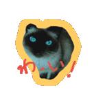 楽しい猫のスタンプ!(個別スタンプ:13)