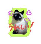 楽しい猫のスタンプ!(個別スタンプ:14)
