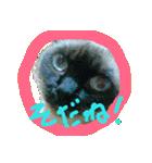 楽しい猫のスタンプ!(個別スタンプ:16)