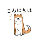 Every Day Dog 柴犬 日本語(個別スタンプ:01)