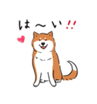 Every Day Dog 柴犬 日本語(個別スタンプ:03)