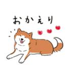 Every Day Dog 柴犬 日本語(個別スタンプ:05)
