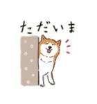 Every Day Dog 柴犬 日本語(個別スタンプ:06)
