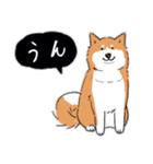 Every Day Dog 柴犬 日本語(個別スタンプ:09)