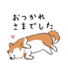 Every Day Dog 柴犬 日本語(個別スタンプ:13)