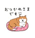 Every Day Dog 柴犬 日本語(個別スタンプ:14)