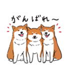 Every Day Dog 柴犬 日本語(個別スタンプ:16)