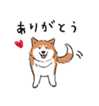 Every Day Dog 柴犬 日本語(個別スタンプ:17)