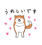 Every Day Dog 柴犬 日本語(個別スタンプ:19)