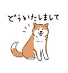 Every Day Dog 柴犬 日本語(個別スタンプ:20)