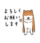Every Day Dog 柴犬 日本語(個別スタンプ:23)