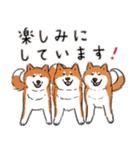 Every Day Dog 柴犬 日本語(個別スタンプ:24)