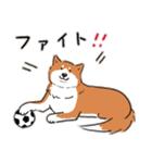 Every Day Dog 柴犬 日本語(個別スタンプ:26)