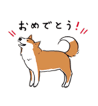 Every Day Dog 柴犬 日本語(個別スタンプ:27)