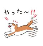 Every Day Dog 柴犬 日本語(個別スタンプ:28)