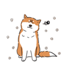 Every Day Dog 柴犬 日本語(個別スタンプ:29)