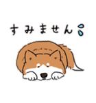 Every Day Dog 柴犬 日本語(個別スタンプ:30)