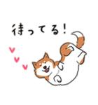 Every Day Dog 柴犬 日本語(個別スタンプ:31)