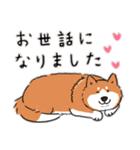 Every Day Dog 柴犬 日本語(個別スタンプ:32)