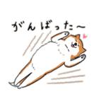 Every Day Dog 柴犬 日本語(個別スタンプ:33)