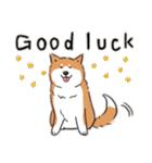 Every Day Dog 柴犬 日本語(個別スタンプ:34)
