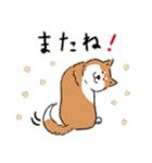 Every Day Dog 柴犬 日本語(個別スタンプ:35)