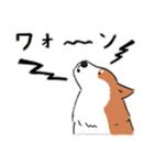 Every Day Dog 柴犬 日本語(個別スタンプ:38)