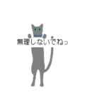 吹き出し『ロシアンブルー』(猫シルエット)(個別スタンプ:07)